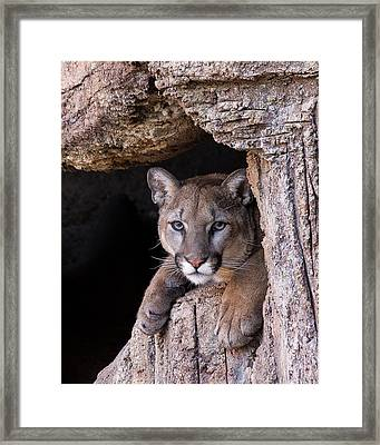 Portrait Of A Watcher Framed Print by Beverly Parks