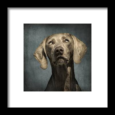 Dog Framed Prints