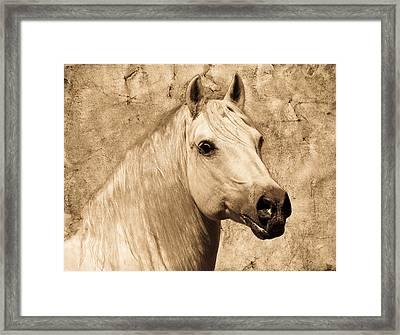 Portrait Of A White Stallion Framed Print by Steve McKinzie