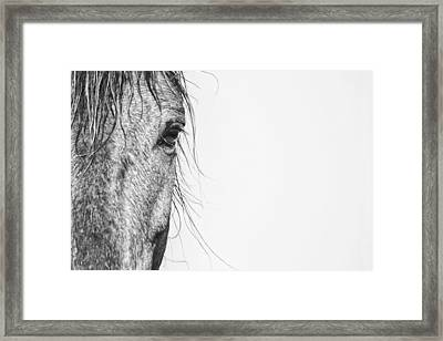 Portrait Of A Wild Mustang Framed Print by Bob Decker