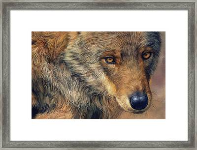 Portrait Of A Wolf Framed Print by David Stribbling