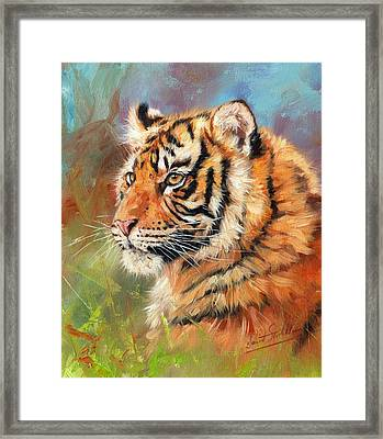 Portrait Of A Young Amur Tiger Framed Print by David Stribbling
