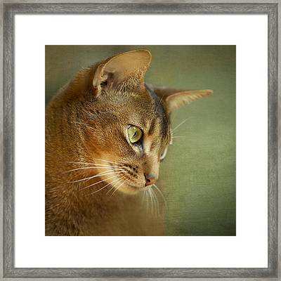 Portrait Of An Abyssinian Cat With Textures Framed Print