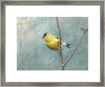 Portrait Of An American Goldfinch Framed Print by Anton Oreshkin