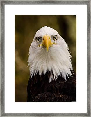 Portrait Of An Eagle Framed Print