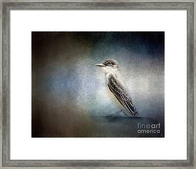 Portrait Of An Eastern Kingbird Framed Print by Jai Johnson