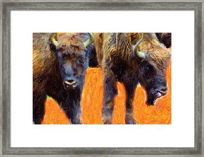 Portrait Of Bison  Framed Print