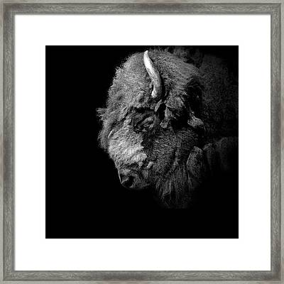 Portrait Of Buffalo In Black And White Framed Print