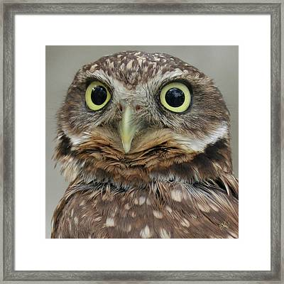 Portrait Of Burrowing Owl Framed Print