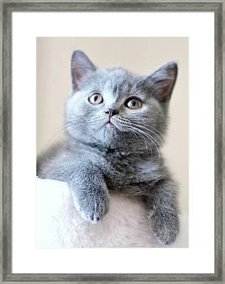 Portrait Of Cute Cat Framed Print by Ozcan Malkocer
