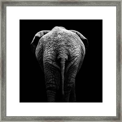 Portrait Of Elephant In Black And White II Framed Print
