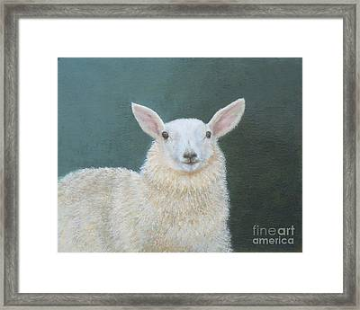Portrait Of Ewe Framed Print