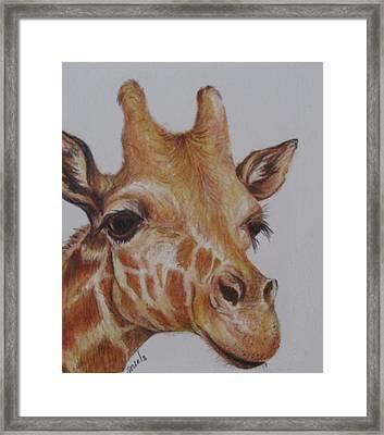 Portrait Of Giraffe Framed Print