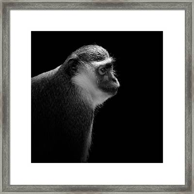 Portrait Of Green Monkey In Black And White Framed Print by Lukas Holas