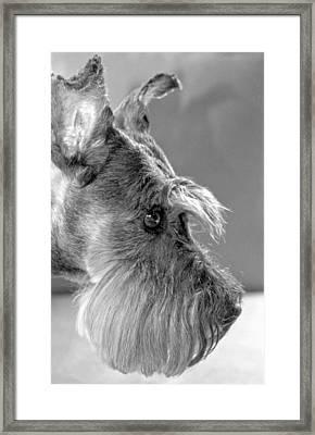 Portrait Of Gretl Framed Print by  Andrea Lazar