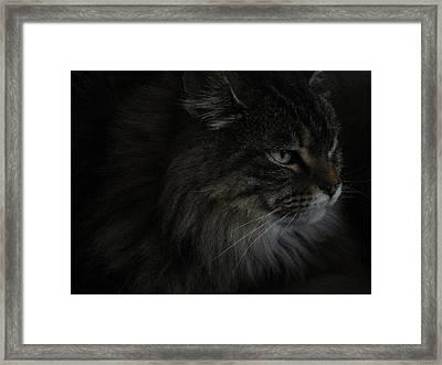 Portrait Of Gypsy Framed Print by Daniel Warren