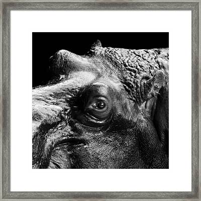 Portrait Of Hippo In Black And White Framed Print