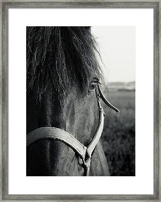 Portrait Of Horse In Black And White Framed Print