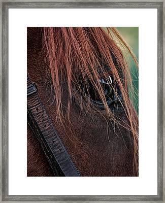 Portrait Of Jane Framed Print by Susan Desmore