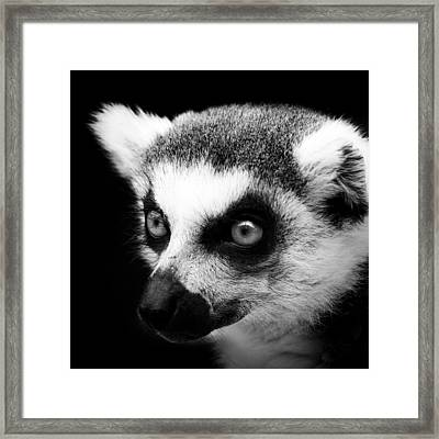 Portrait Of Lemur In Black And White Framed Print