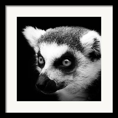 Lemur Framed Prints
