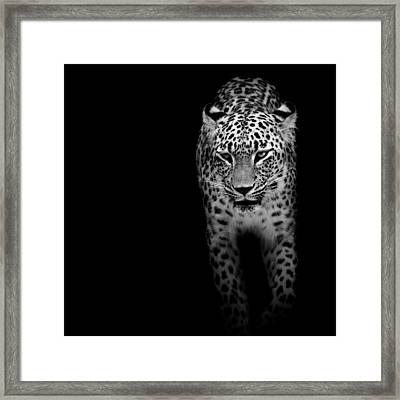Portrait Of Leopard In Black And White II Framed Print by Lukas Holas
