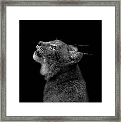 Portrait Of Lynx In Black And White Framed Print by Lukas Holas