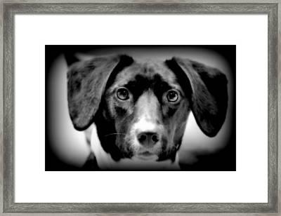 Portrait Of Man's Best Friend II Framed Print by Aurelio Zucco