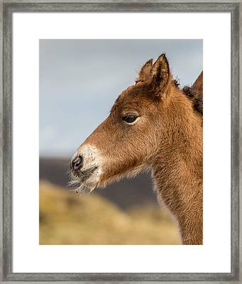 Portrait Of Newborn Foal Framed Print by Panoramic Images