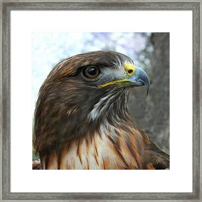 Portrait Of Red-shouldered Hawk Framed Print by Ben and Raisa Gertsberg