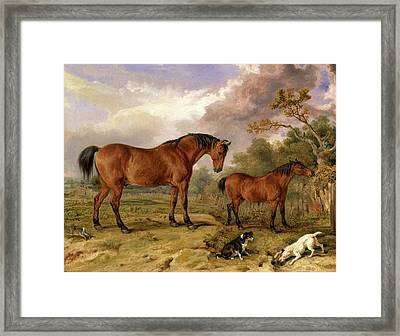 Portrait Of Reformer, Blucher, Tory And Crib Framed Print by Litz Collection