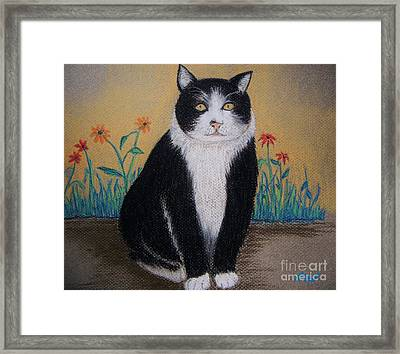 Portrait Of Teddy The Ninja Cat Framed Print by Reb Frost