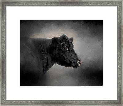 Portrait Of The Black Angus Framed Print