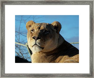 Portrait Of The Mighty Queen Framed Print by Lingfai Leung