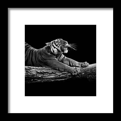 Zoo Animals Framed Prints