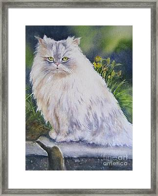 Portrait Of White Cat Framed Print by Patricia Pushaw