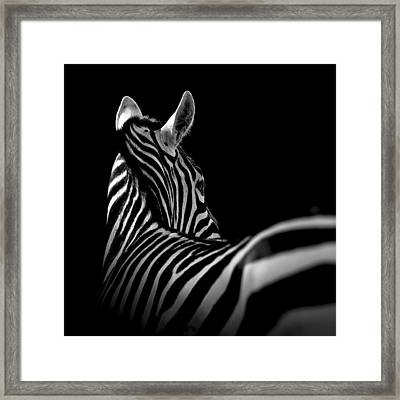 Portrait Of Zebra In Black And White II Framed Print
