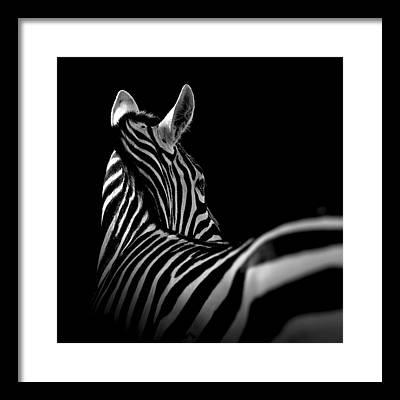 Zoo Framed Prints