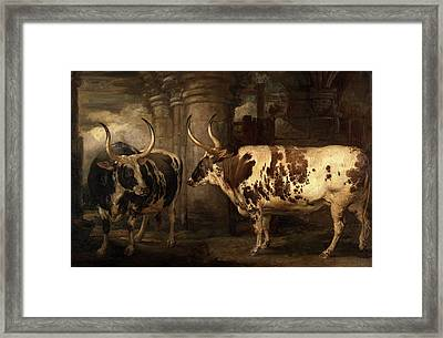 Portraits Of Two Extraordinary Oxen, The Property Framed Print