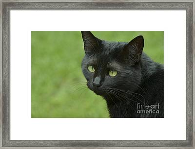 Portrait Of Satin Framed Print