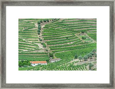 Portugal, Douro Valley, Hillside Framed Print by Rob Tilley