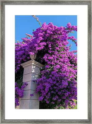 Portugal, Pinhao, Bougainvillea (large Framed Print