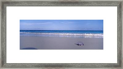 Portuguese Man-of-war Physalia Physalis Framed Print by Panoramic Images