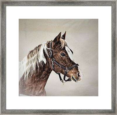 Posed Framed Print by Gary Smith