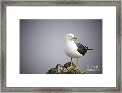 Posed Gull Framed Print by Anne Gilbert