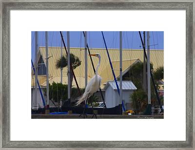 Posing Egret Framed Print by Debra Forand