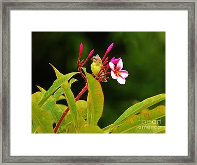 Posing Finch Framed Print