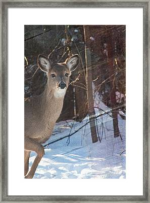 Posing For Me Framed Print by Terri Harper