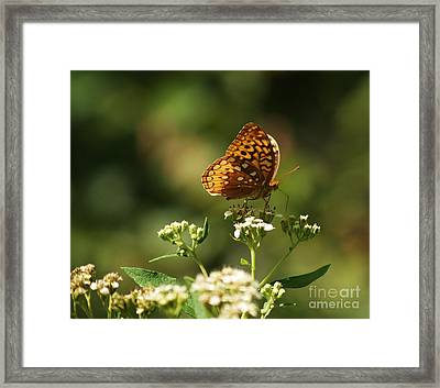 Posing For The Picture Framed Print by Julie Clements
