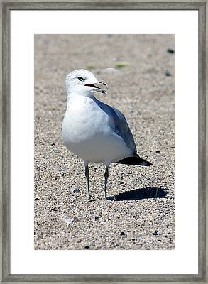 Framed Print featuring the photograph Posing Gull by Debbie Hart